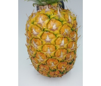 Ananas Strasweet  1  Frutto